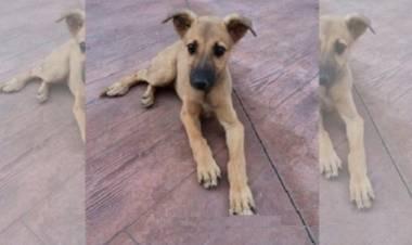 Denuncian que tiraron un perro desde el segundo piso de un edificio de la Armada en Puerto Belgrano