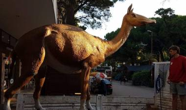 Pehuen Co: Llegó la Macrauchenia que estará en el Parque de Mega Fauna en Plaza Carrasco