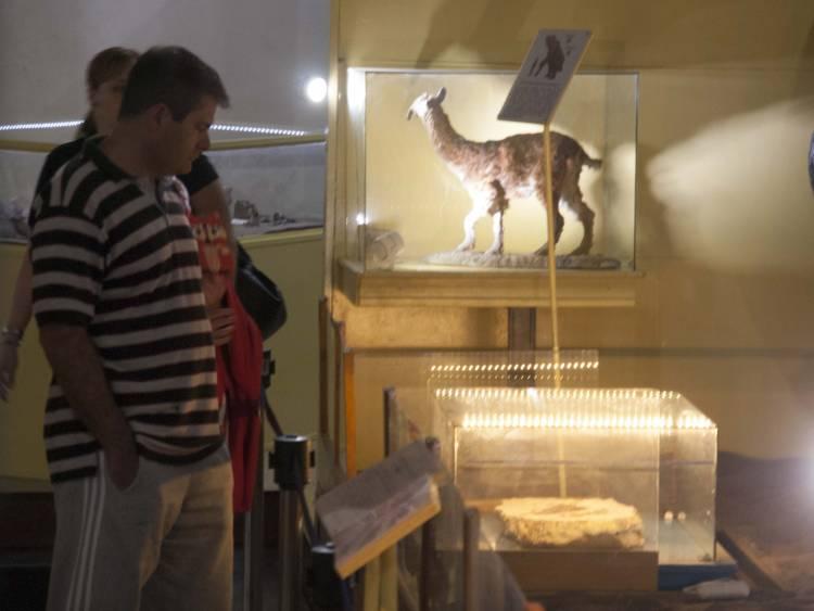En Museo Darwin habrá talleres para niños de 7 a 10 años