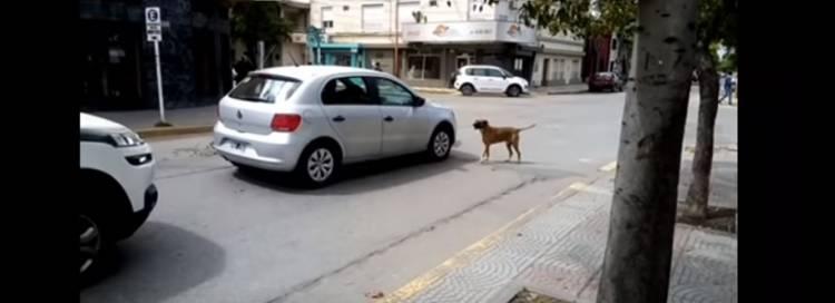 La Agrupación Dejando Huellas emitió un comunicado sobre los perros que fueron llevados al corralón