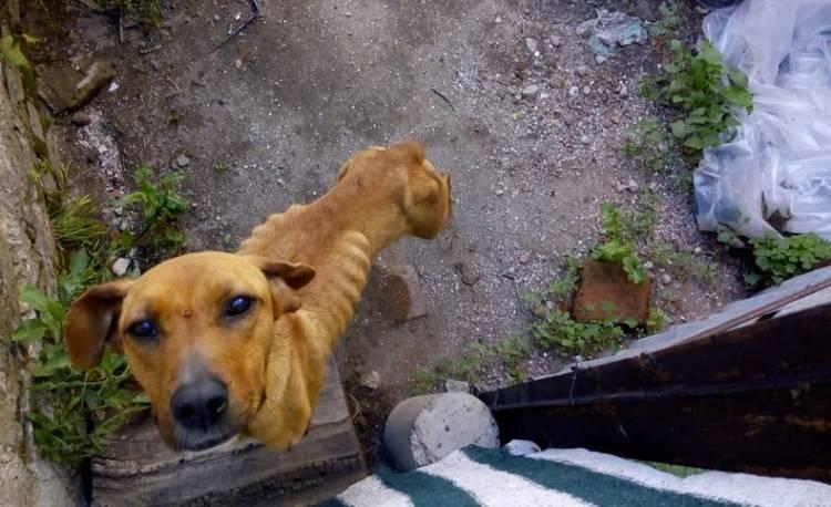 Rescataron a un perro en muy mal estado