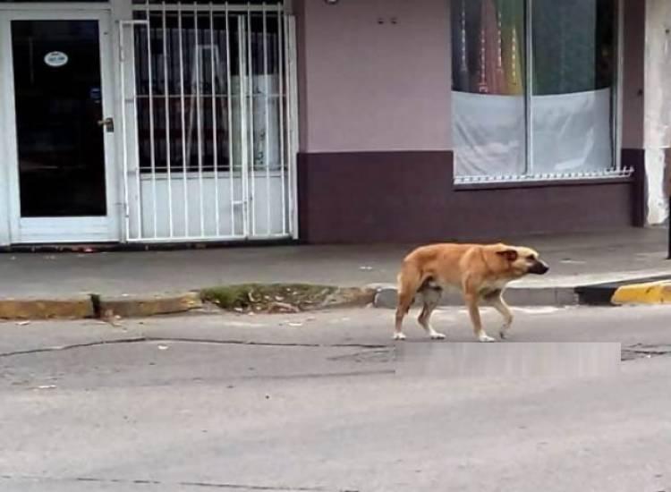 Vecinos asistieron a una mujer que fue atacada por un perro