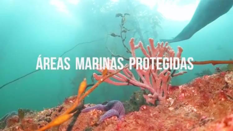 Argentina cuenta con dos nuevas Áreas Marinas Protegidas
