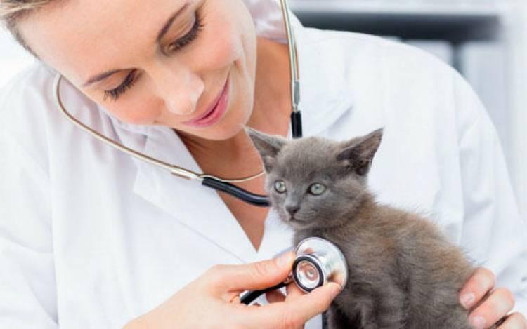 El Municipio llama a cubrir vacante de veterinario