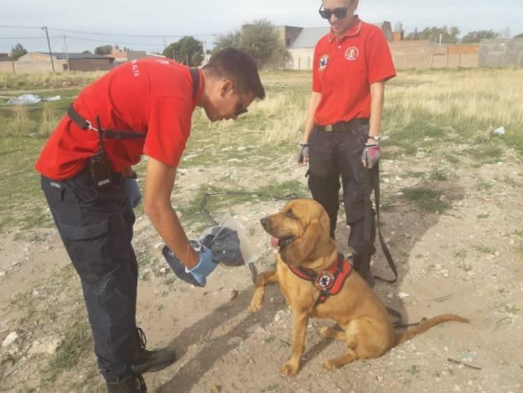 Bahía Blanca: Los perros del K9 de nuestra ciudad buscan a la chica de 15 años que está desaparecida