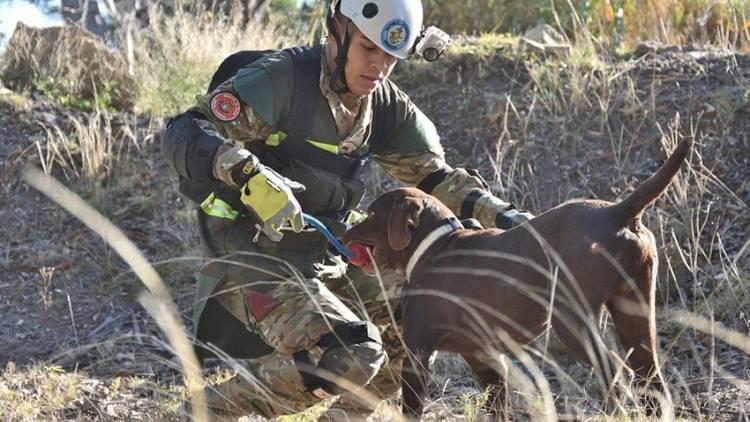 Perros y guías de todo el país se capacitaron en Puerto Belgrano
