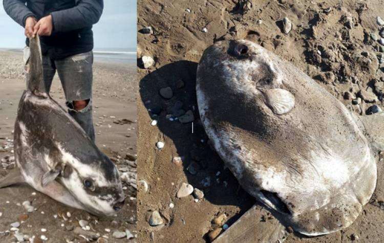 Pehuen Co: Sorpresa por una extraña aparición en la costa