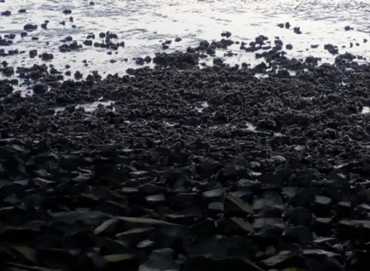 Arroyo Pareja: Tras la sudestada aparecieron las ostras