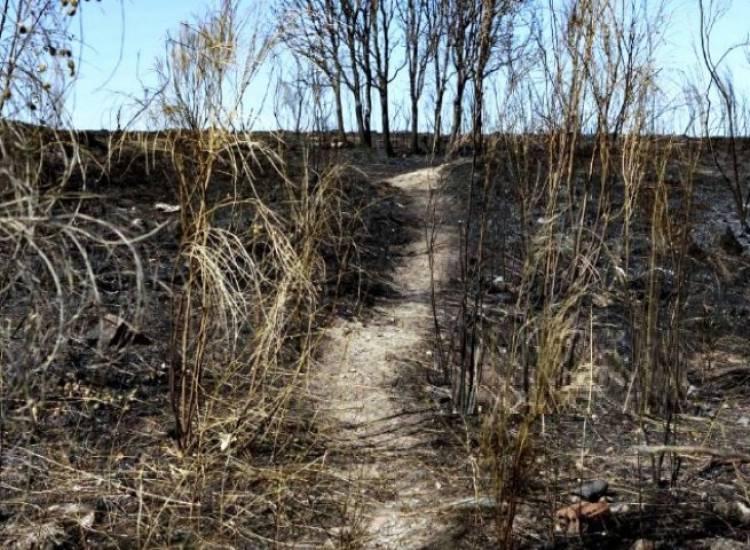 Habría 3 millones de hectáreas en riesgo por incendios
