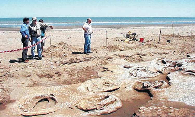 Pehuen Co: Recomendaciones ante la aparición de fauna marina en la playa