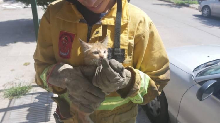 Bomberos Voluntarios rescataron a un gato que estuvo dos días atrapado en un auto