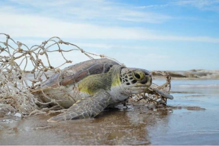 En Villa del Mar un pescador rescató a una tortuga marina