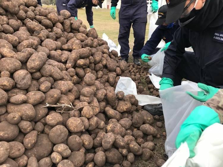 Pehuen Co: Este lunes se realizará entrega de bolsas de papas en la Delegación Municipal
