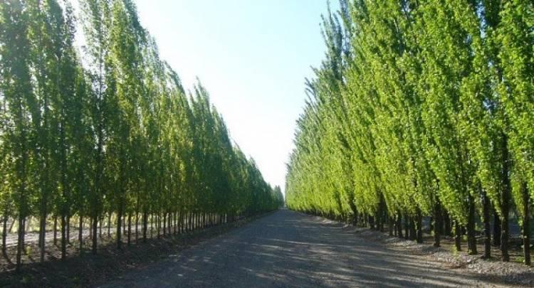 Desde Bien Común se pidió al Municipio planificar un cordón forestal contra contaminación petroquímica