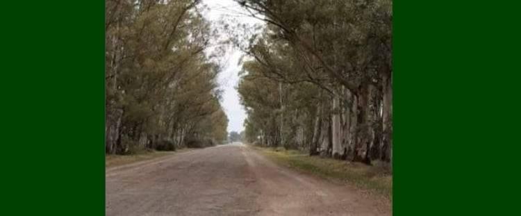 Se aprobó una ordenanza que declara al camino del Puente Negro como sector de arbolado protegido