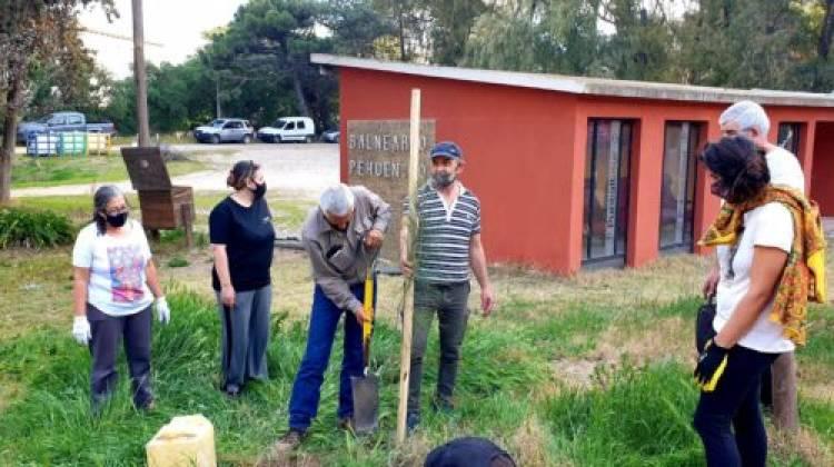 """Por el """"Día del árbol"""" se plantaron ejemplares en Pehuen Co"""